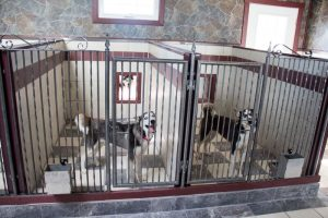 Petland Breeders Spotlight on Hillview Kennel: Where Does Petland