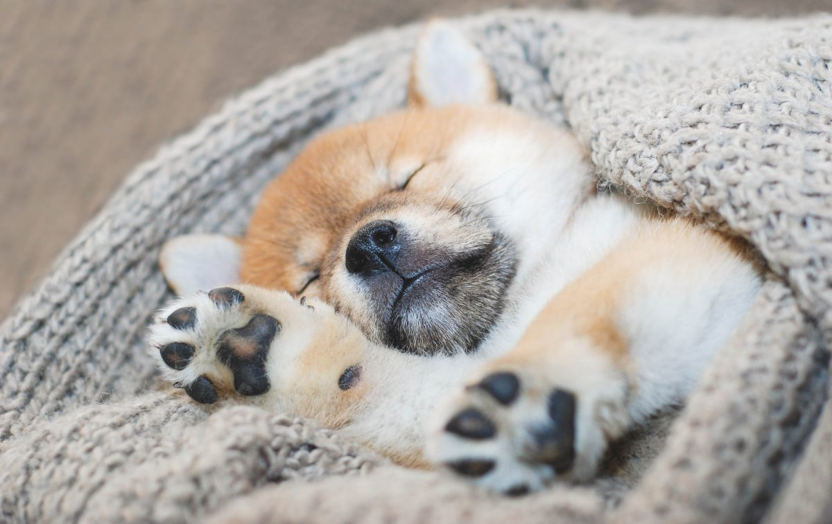 3 Suggestions to Help Cute Puppy Dogs Sleep During the Night