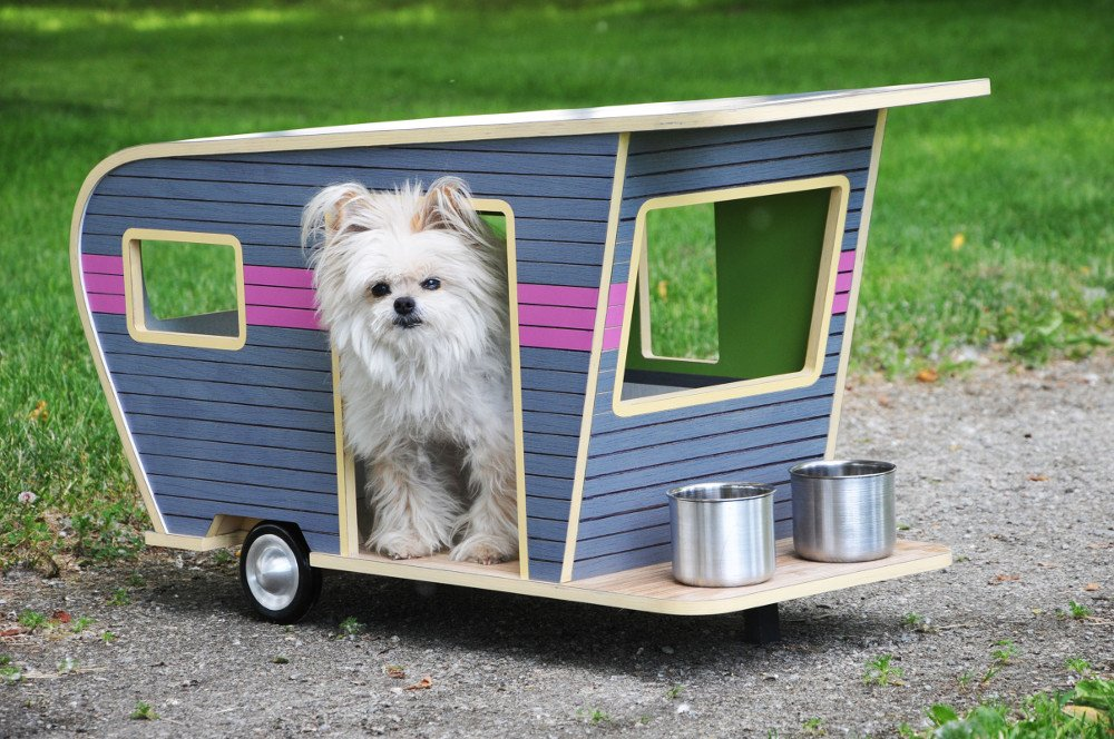 4 Must Do's While Traveling in an RV with Your Pet