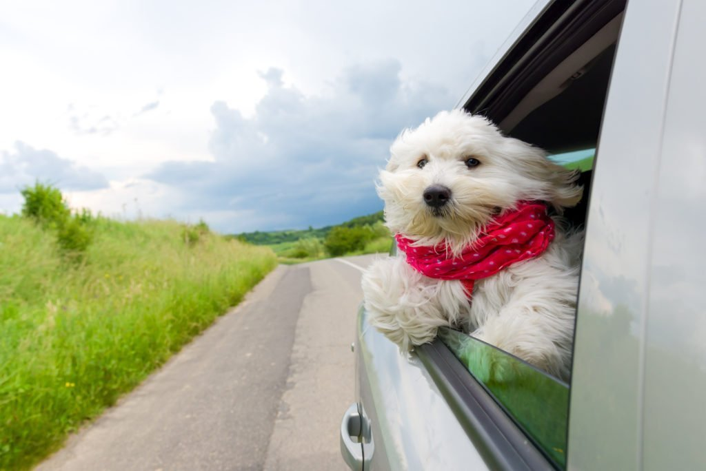 4 Things to Consider before Taking Your Pet Across the Country