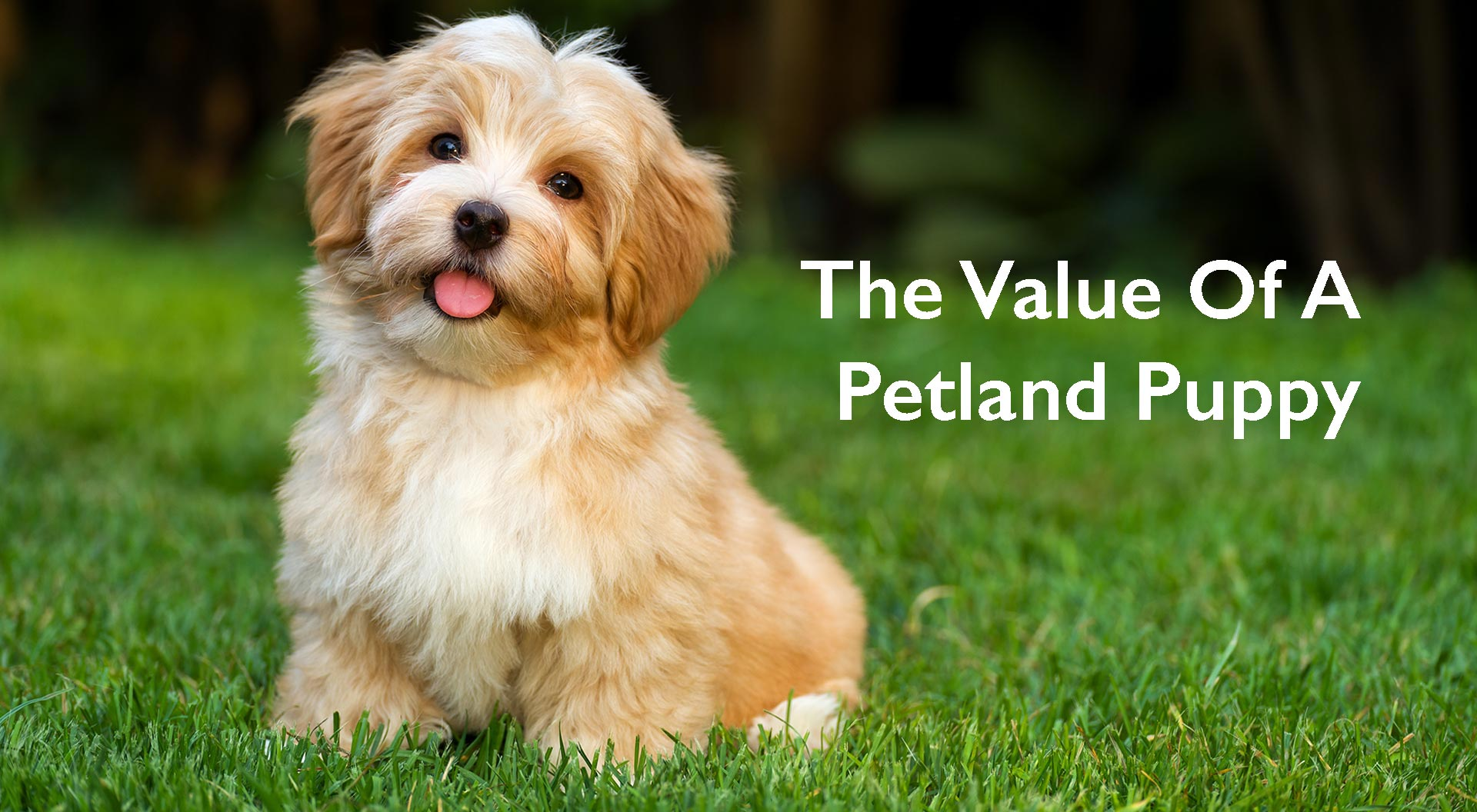 Summerville / Charleston Value of a Petland Puppy
